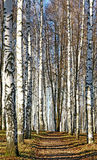 Chemin ensoleillé dans la forêt d'octobre d'automne Images stock