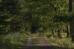 Chemin ensoleillé près des villes de Dacice et de Trebetice Images stock