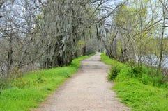 Chemin entouré par l'arbre près d'un lac Photographie stock libre de droits