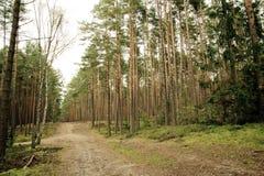 Chemin entre les arbres Image libre de droits