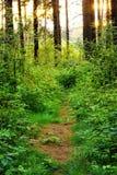 Chemin envahi dans les bois image libre de droits