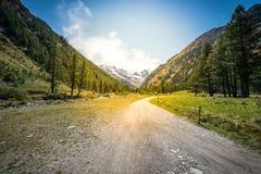 Chemin et arbres de montagne au temps de coucher du soleil Photo stock