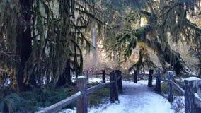 Chemin fantasmagorique Image stock