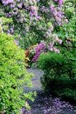 Chemin fleuri Images stock