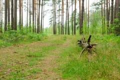 Chemin forestier étroit Photos libres de droits
