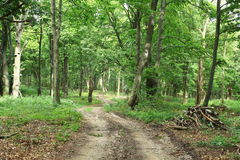 Chemin forestier. Image stock