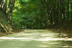 Chemin forestier. Photographie stock