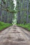 Chemin forestier Photos stock