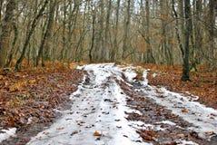 Chemin forestier 2 Photo stock