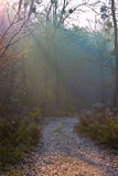 Chemin forestier image stock