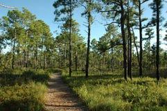 Chemin forestier Photographie stock libre de droits