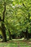 Chemin forestier Image libre de droits
