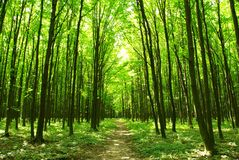 Chemin forestier Photo stock