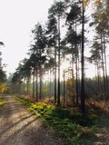 Chemin forestier Images libres de droits