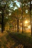 Chemin forestier au coucher du soleil Photo stock