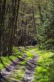 Chemin forestier au printemps Images stock