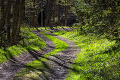 Chemin forestier au printemps Photographie stock