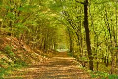 Chemin forestier automnal Photo stock