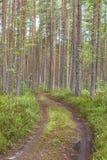 Chemin forestier autour des pins et de la mousse photo stock