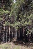 Chemin forestier aux valeurs maximales de concentration au poste de travail de KOH Photos stock