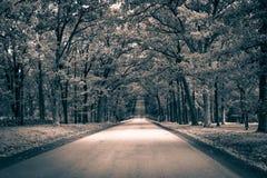 Chemin forestier aux valeurs maximales de concentration au poste de travail de KOH Photos libres de droits