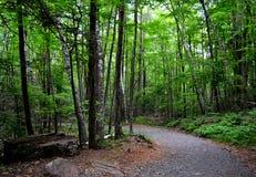 Chemin forestier aux valeurs maximales de concentration au poste de travail de KOH photo libre de droits