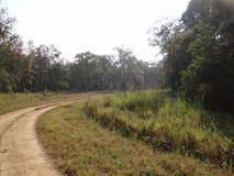 Chemin forestier aux valeurs maximales de concentration au poste de travail de KOH Image libre de droits