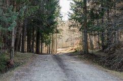 Chemin forestier aux valeurs maximales de concentration au poste de travail de KOH Photographie stock libre de droits