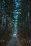 Chemin forestier aux valeurs maximales de concentration au poste de travail de KOH Photo stock
