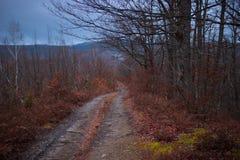 Chemin forestier aux valeurs maximales de concentration au poste de travail de KOH Image stock