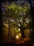 Chemin forestier avec l'arbre géant en automne Photo libre de droits