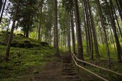 Chemin forestier, Boserc Photo stock
