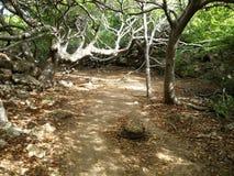 Chemin forestier couvert photographie stock libre de droits