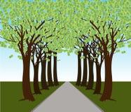 Chemin forestier d'arbre d'argent Photos libres de droits