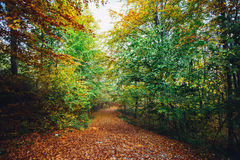 Chemin forestier d'automne Photo stock
