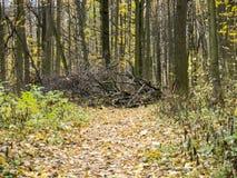 Chemin forestier d'automne bloqué par des branches des arbres tombés Photo libre de droits