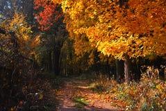 Chemin forestier d'or d'automne Image libre de droits