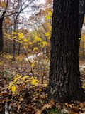 Chemin forestier d'enroulement photographie stock