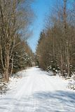 Chemin forestier d'hiver images stock