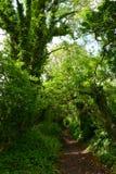 Chemin forestier danois Photo stock