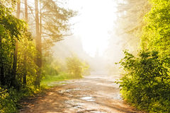 Chemin forestier dans le regain image stock