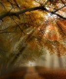 Chemin forestier de chute Photos libres de droits