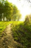 Chemin forestier de coucher du soleil Image libre de droits