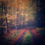 Chemin forestier de hêtre Image libre de droits