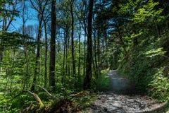 Chemin forestier de Kamikochi Photographie stock libre de droits