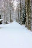 Chemin forestier de l'hiver Images stock