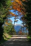 Chemin forestier de montagne Photographie stock libre de droits