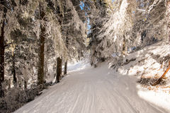 Chemin forestier de neige Photos stock