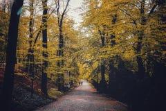 Chemin forestier de Prague photo stock