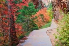 Chemin forestier de Zion Images libres de droits